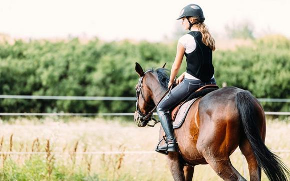 Valorisation chevaux