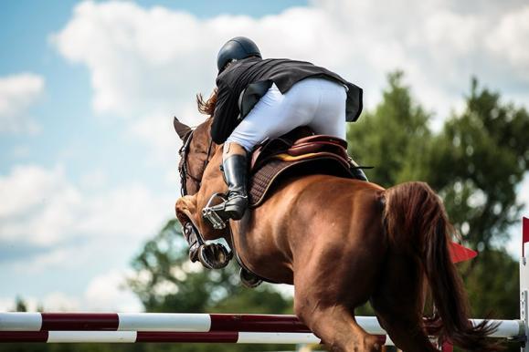 coaching équitation